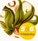 Unidad didáctica para 5º y 6º Primaria